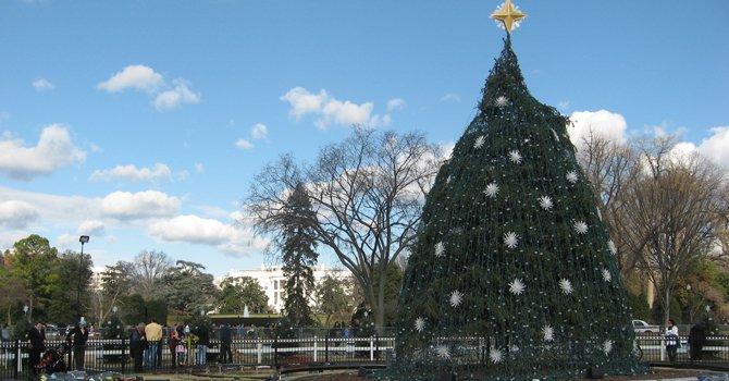 Arbolitos anuncian la Navidad en DC