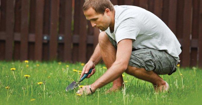 Disfruta del verano y prepara, desde ahora, el terreno para gozar un patio limpio y saludable
