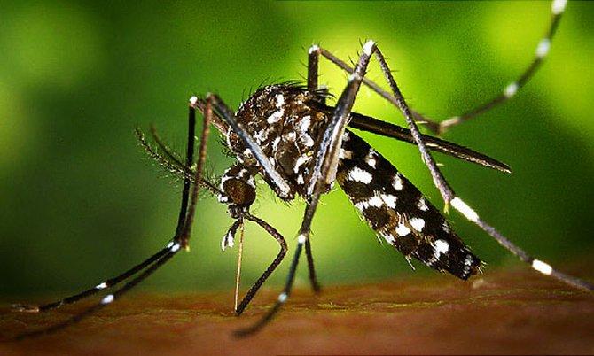 Miami cae al Zika