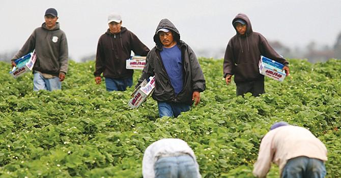 """""""Los sumiría en pobreza"""" eliminar a residentes indocumentados de los hogares con estatus mixto, afirman"""