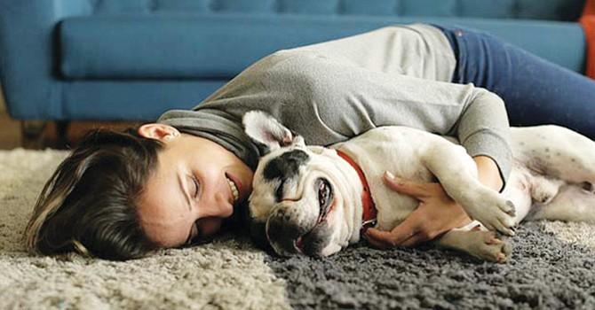 ¿Animales domésticos en casa? son amados por los miembros de la familia, pero requieren de mucha limpieza y cuidados