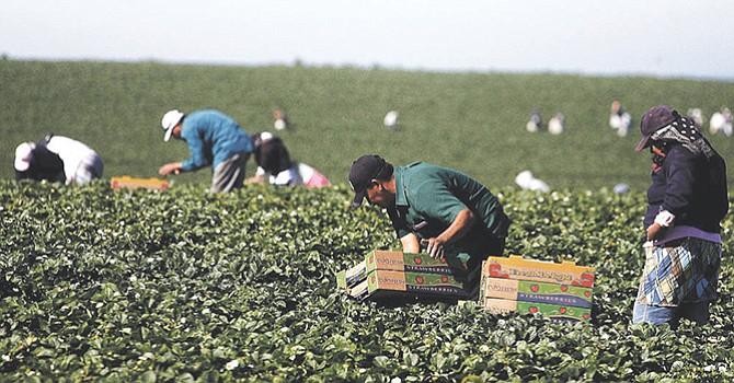 Trump ahora tampoco va a deportar campesinos