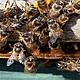 Panal de abejas. Foto-Cortesía :adninformativo.mx