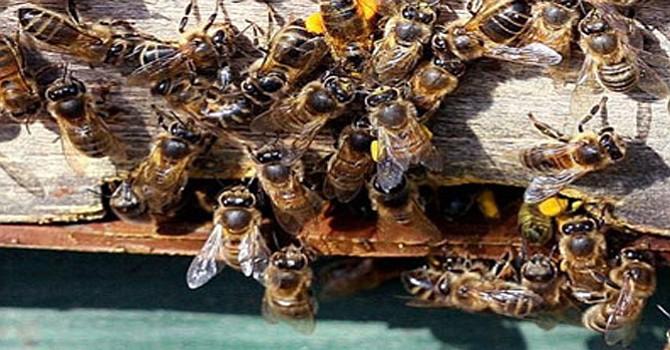 Ataca enjambre de abejas a un hombre en Ramona;  fue llevado al Hospital Pomerado en Poway
