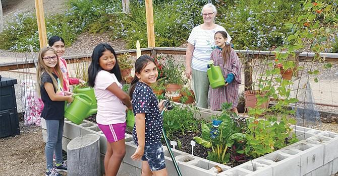 Jardines Escolares Comunitarios han proliferado en la mayoría de las escuelas de CVESD; algunas han rebasado expectativas