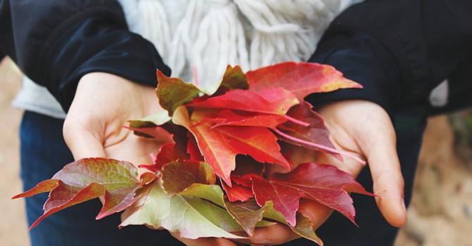 Aumento de humedad y baja de temperaturas, ambiente perfecto para las alergias, en otoño proliferan los ácaros de polvo en los hogares