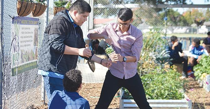 Celebran Día Mundial de la Alimentación con la primera cosecha del Jardín Culinario, alumnos y maestros de Chula Vista High School