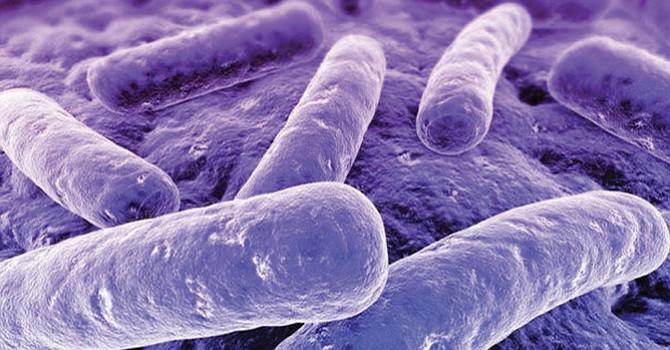 Peligrosa bacteria se transmite sexualmente y es inmune a los antibióticos