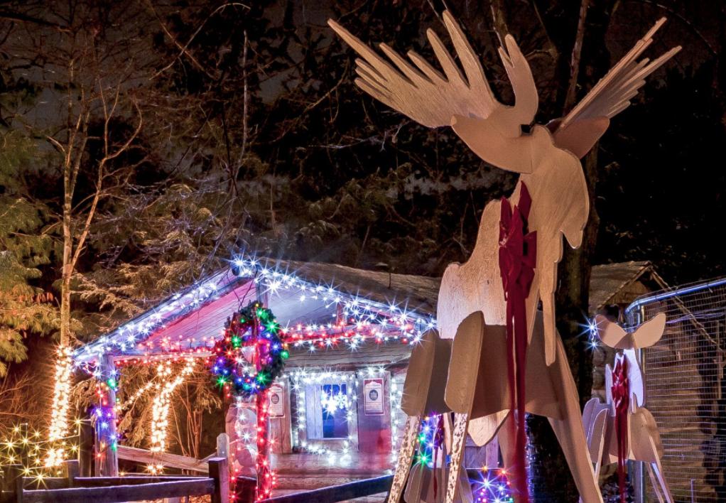 Este año también se instalarán exhibiciones de linternas a gran escala alrededor del Zoo.