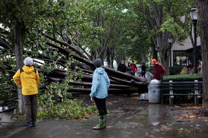 Miles de árboles caídos en la región a causa de Sandy, como éste en Manhattan. AP