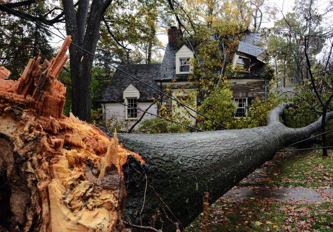En Washington DC, un árbol cayó en una avenida principal. TWP