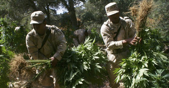 Las autoridades estadounidenses dan otro duro golpe a los productores y traficantes de drogas.