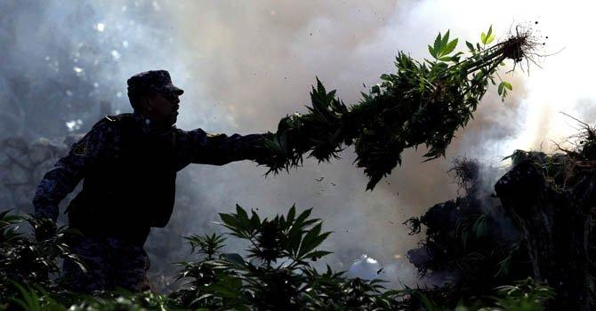 Un diputado de izquierda propone crear ley para regular la marihuana.