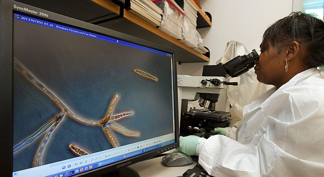 Los Centros para el Control y Prevención de Enfermedades (CDC) en Atlanta, investigan en octubre el componente que causó el brote de meningitis.