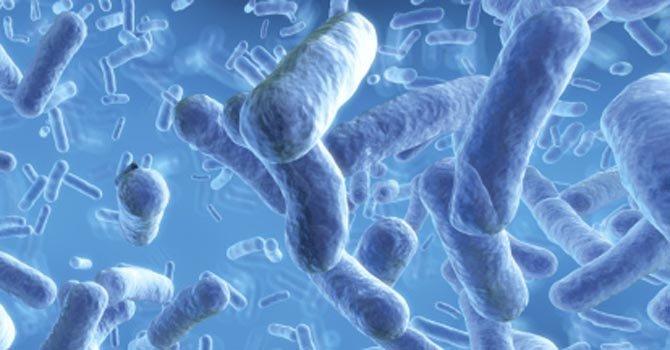 En Chiapas, la bacteria mató a cinco bebés y afectó a otros 41.