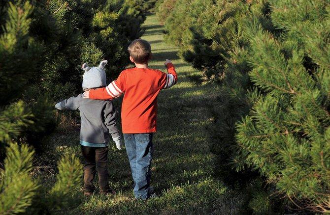 Hay muchas opciones antes de tomar la decisión equivocada de dejar el árbol en la calle.
