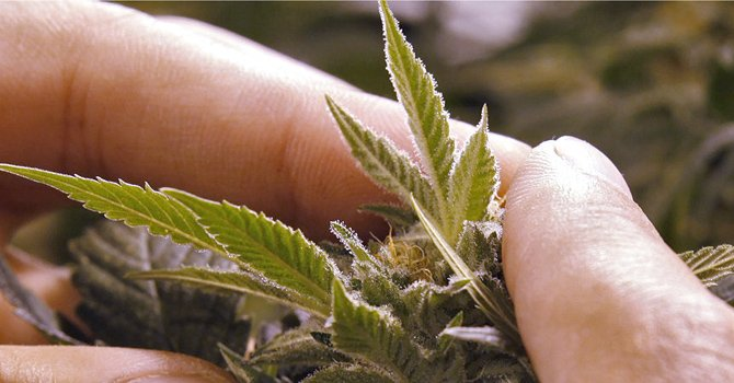 Nueva Jersey: debaten acceso de niños a la marihuana