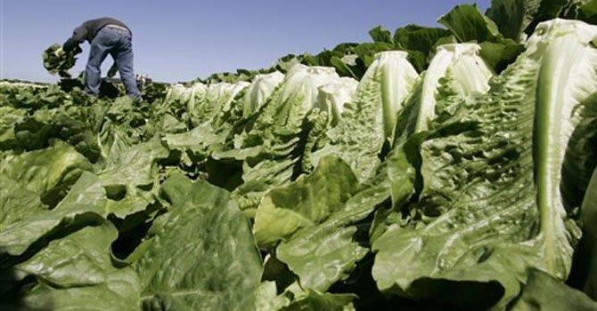 ¿Los vegetales verdes son peligrosos?