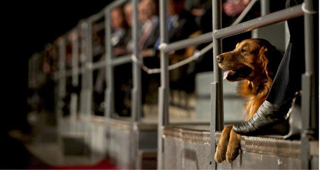 """Bravo, un perro que """"conoce"""" los secretos del Pentágono"""