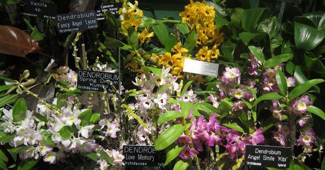 Diversas especies de orquídeas de Latinoamérica se exponen en el Museo Nacional de Historia Natural en Washington, DC.