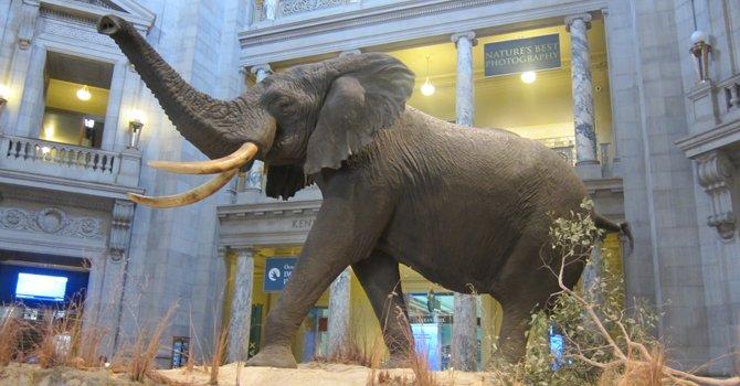 Especies en extinción en museo naturalista de DC