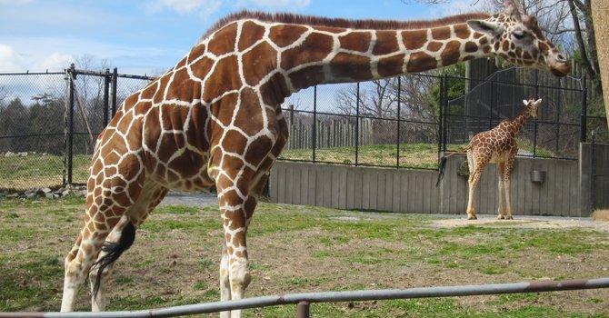 Animales que maravillan en el Maryland Zoo