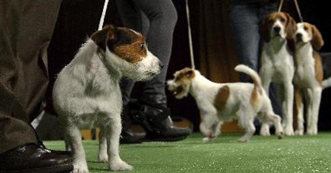 Un canal de televisión para perros