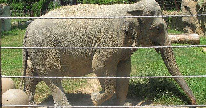 DC: el National Zoo es un paseo fantástico