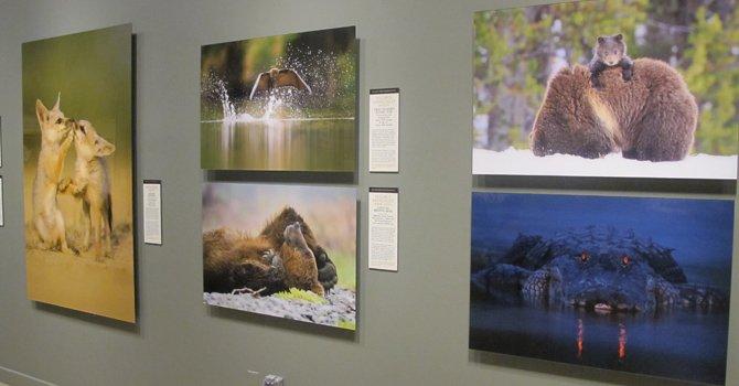 Fotos de la naturaleza en el Smithsonian
