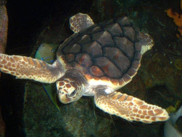 Algas marinas matan a tortugas en El Salvador