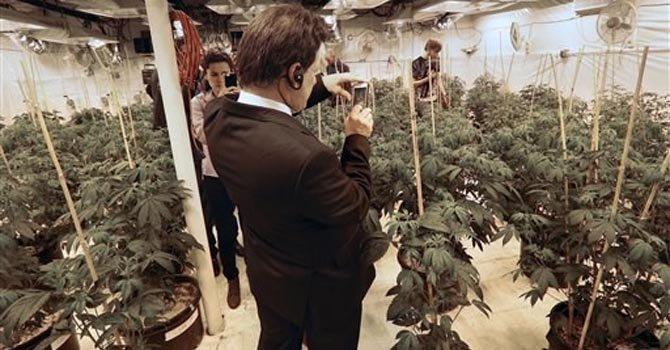 México y Uruguay exploran marihuana legal en EE.UU.