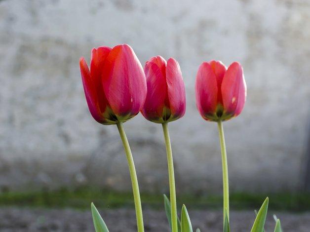 Alegra tu hogar en primavera con flores