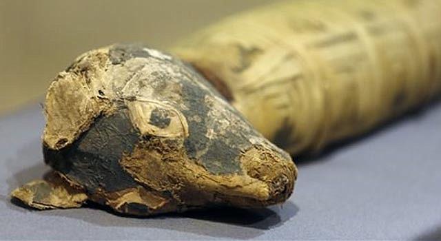 """oto del 20 de marzo de 2014 de un perro momificado que es parte de la exhibición """"Criaturas entrañables: Momias animales en el Antiguo Egipto"""", en el Museo Bowers del condado de Orange, en Santa Ana, California. (Foto AP/Damian Dovarganes)"""