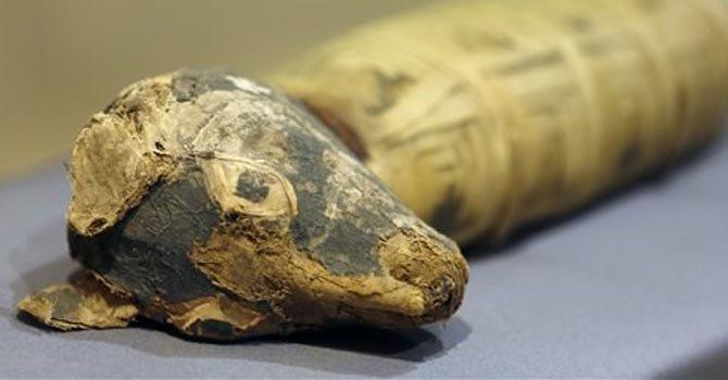 Museo exhibe momias de animales