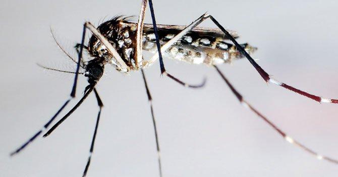 Picadura de insectos, un peligro