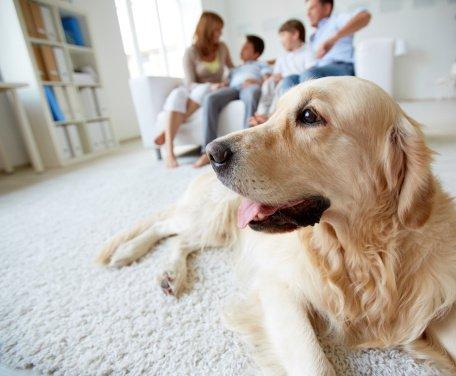 ¿Debe mi familia adoptar un perro?