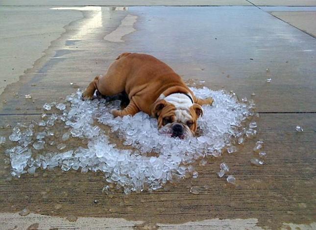 Consejos prácticos para combatir el calor sin un aire acondicionado