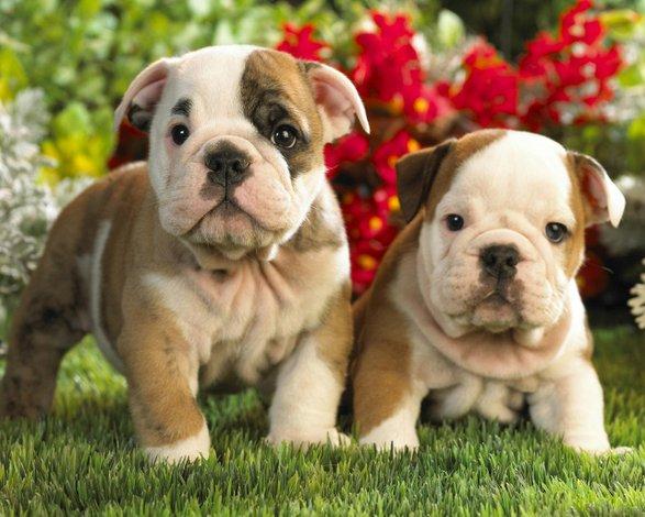 ¿Planeas llevar un cachorro a casa? Conoce qué debes hacer y qué no