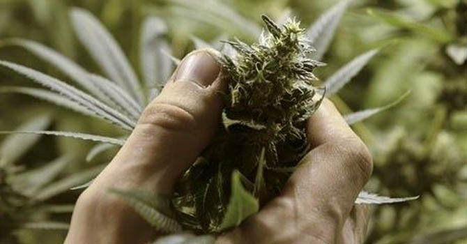 Uruguay abre su primera feria de la marihuana