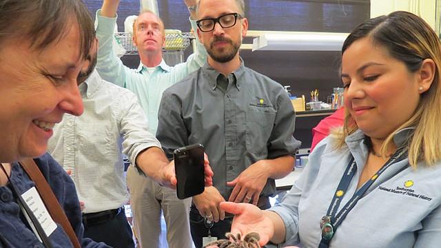 La técnica Rosa Pineda muestra una tarántula en el Smithsonian.