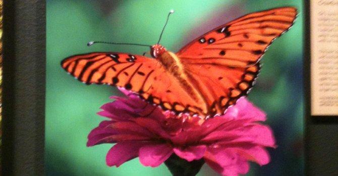 DC: imágenes de la naturaleza en el Smithsonian