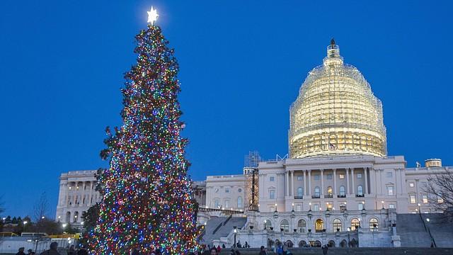 El arbolito de Navidad en los jardines exteriores del Capitolio en Washington, DC.