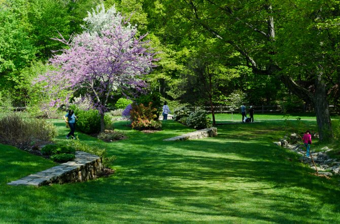 Lilac Sunday en el Arnold Arboretum de Jamaica Plain