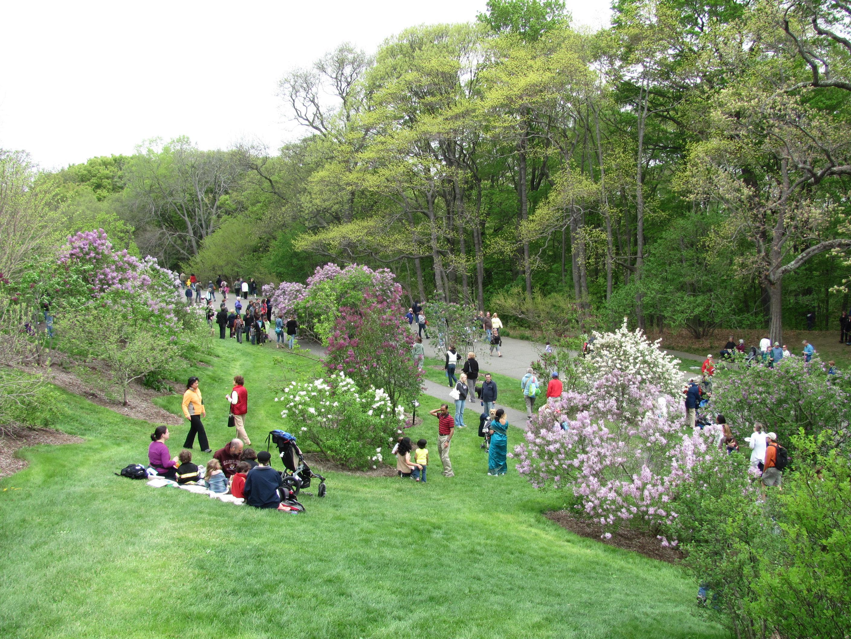 Lilac Sunday en el Arnold Arboretum