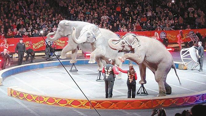 No más animales en los circos a partir de octubre