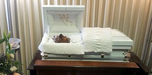 Proponen ley para enterrar mascotas junto con sus dueños