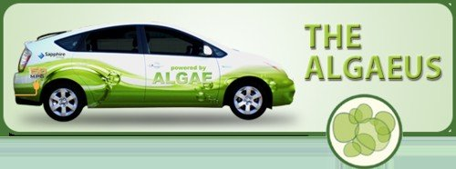 ¿Llegarán las algas a ser el combustible del futuro?