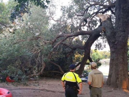 Una rama cae sobre un grupo de personas en New Braunfels