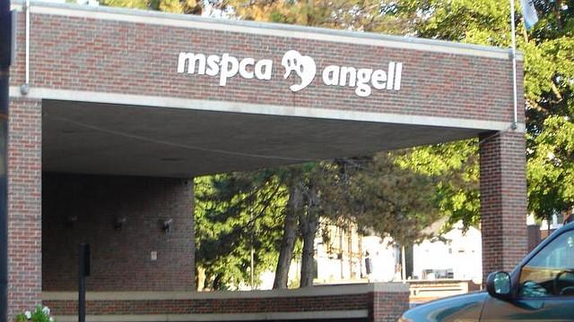 Rob Halpin, Director de Relaciones Públicas para MSPCA-Angell, una organización que ayuda a los animales, dijo que su agencia espera presentar cargos de crueldad animal, un delito grave, pero se desconoce cuántos exactamente.