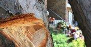 En este árbol se encontró una bala. Al fondo se ve la entrada a la vivienda donde el joven de 17 años Danny Centeno caería abatido bajo los disparos.